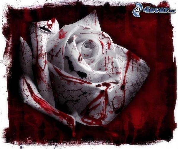Rosa bianca, sangue