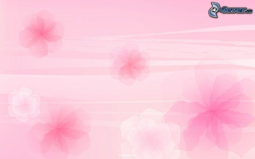 fiori rossi, sfondo rosa
