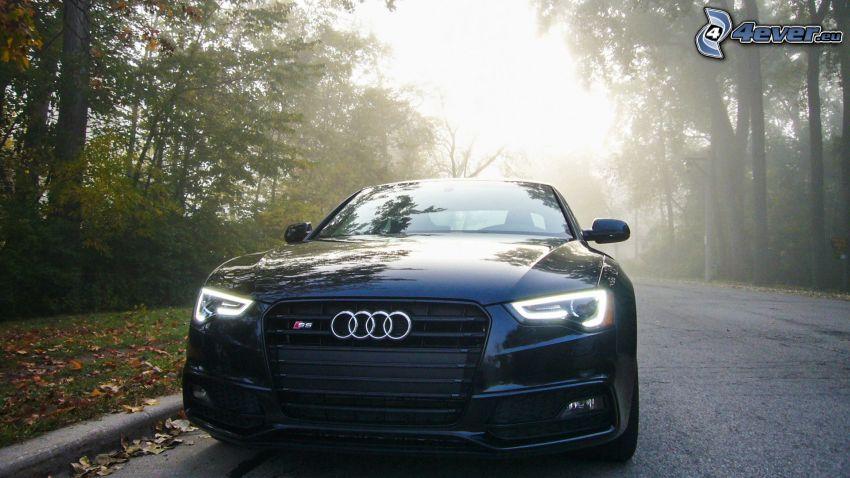 Audi S6, il percorso attraverso il bosco