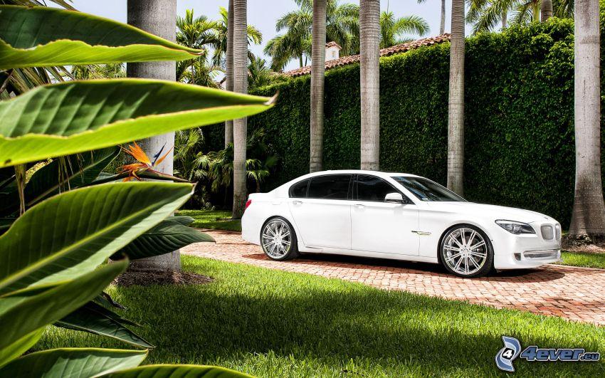 BMW 7, marciapiede, siepe, prato, foglie verdi