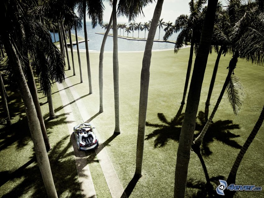 BMW i8, concetto, palme, mare