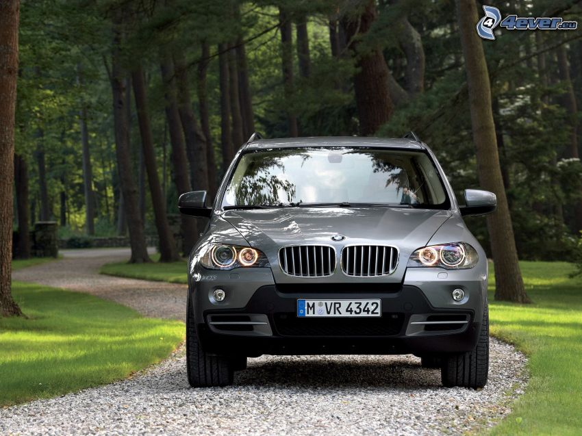 BMW X5, strada, foresta