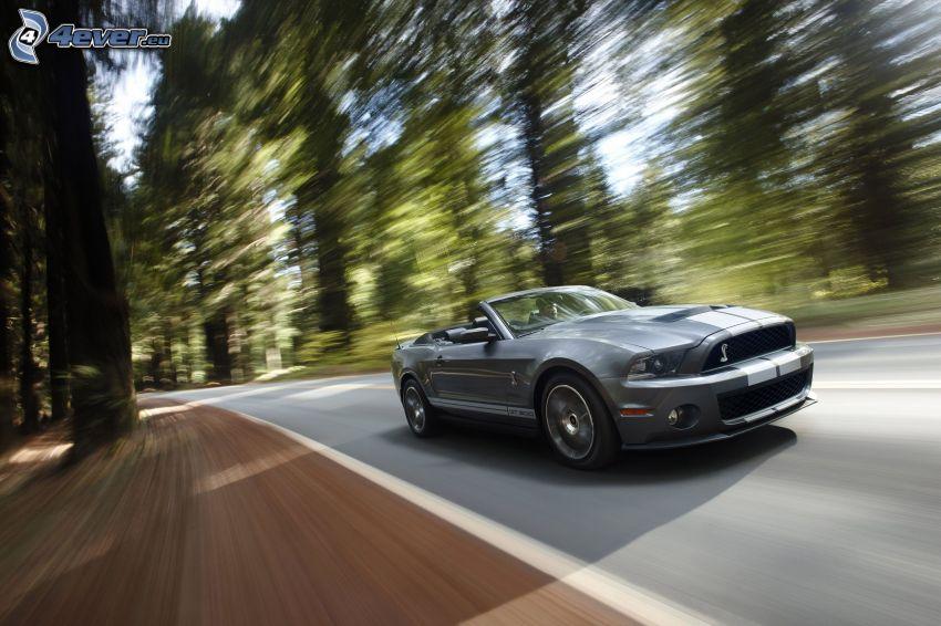 Ford Shelby GT500KR, cabriolet, velocità, il percorso attraverso il bosco
