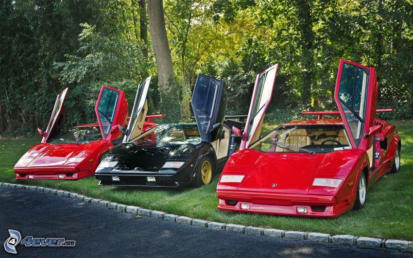 Lamborghini, porta, veterani