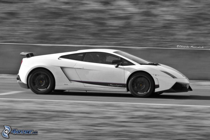Lamborghini Gallardo LP570, velocità, bianco e nero
