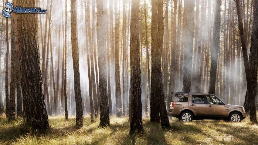 Land Rover DC100, foresta