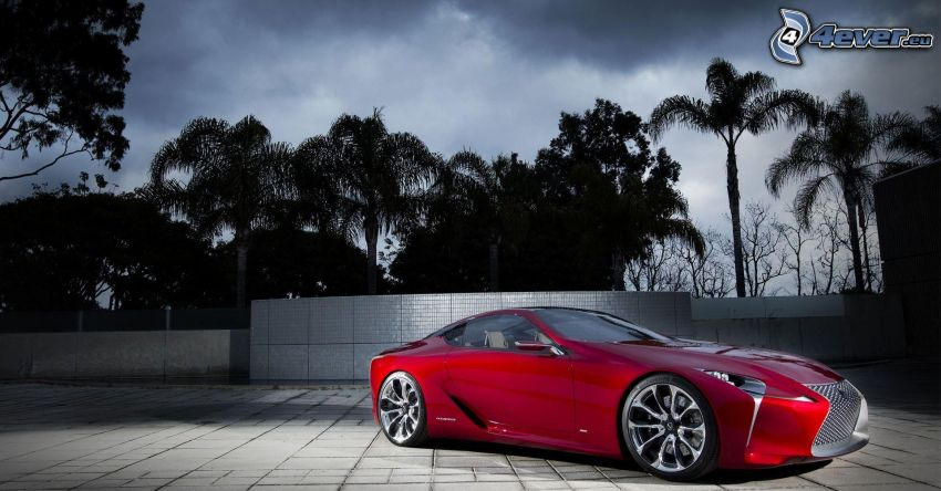 Lexus, palme, piastrelle