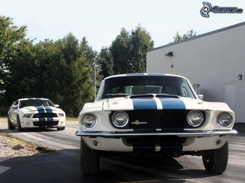 Ford Mustang Shelby, veicolo d'epoca