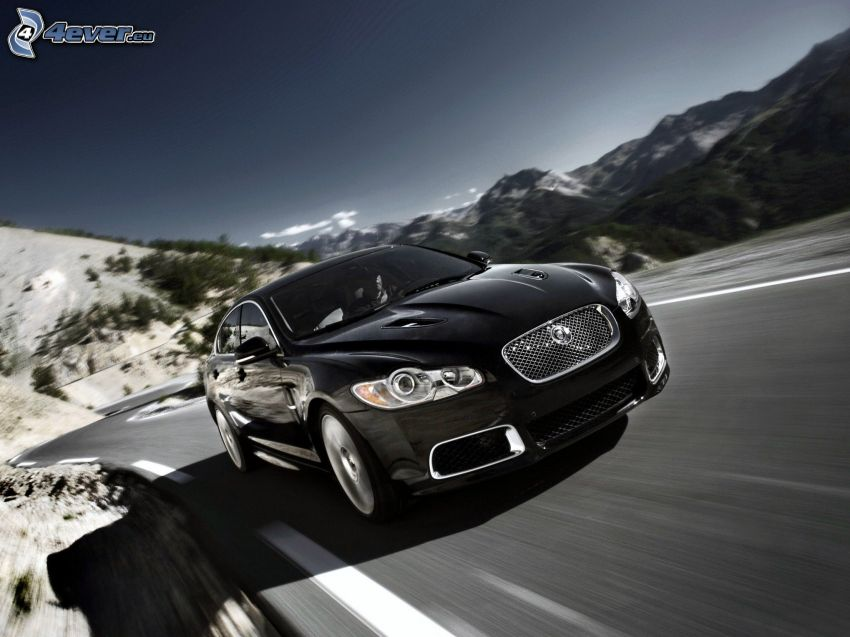 Jaguar, velocità, strada