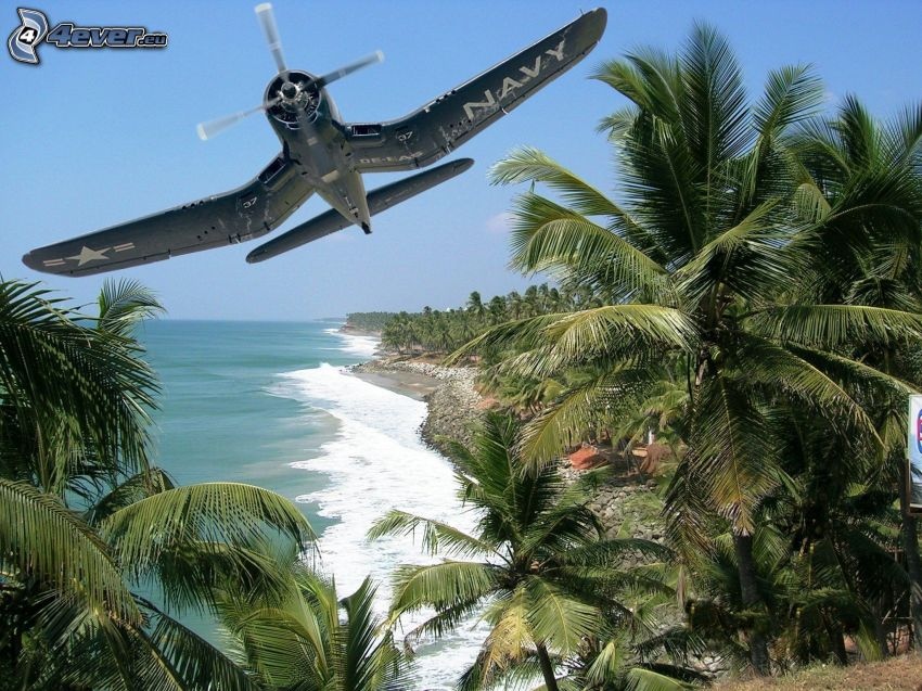 aereo, palme, mare