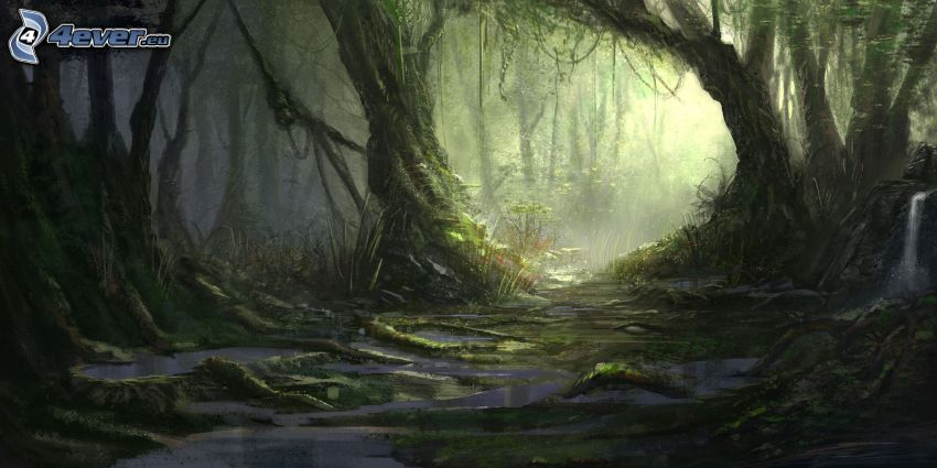 rivo in un bosco, paludi