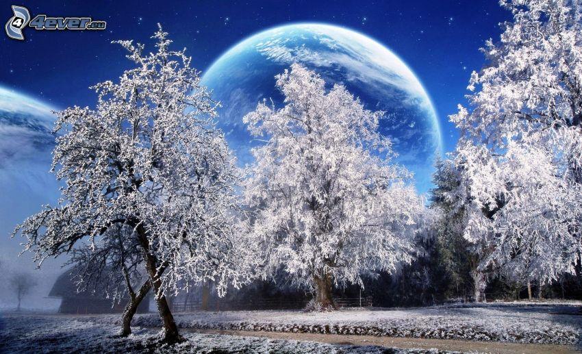 alberi coperti di neve, luna