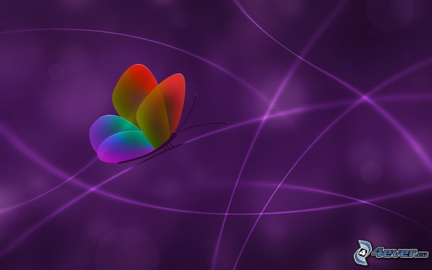 farfalla colorata, linee bianche, sfondo viola