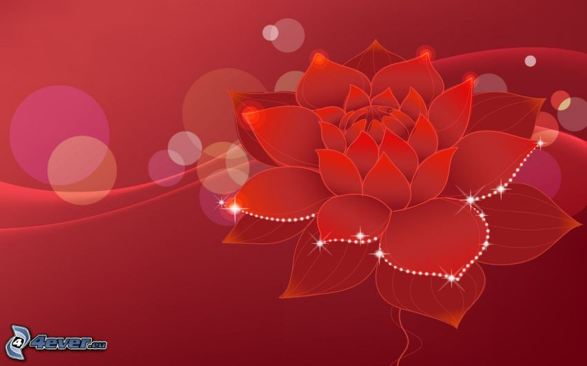 fiore rosso, sfondo rosso, cerchi