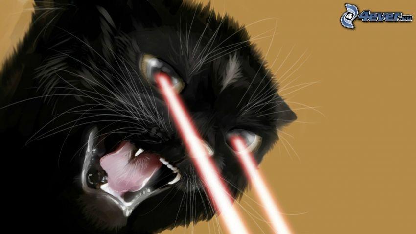 gatto, raggi laser