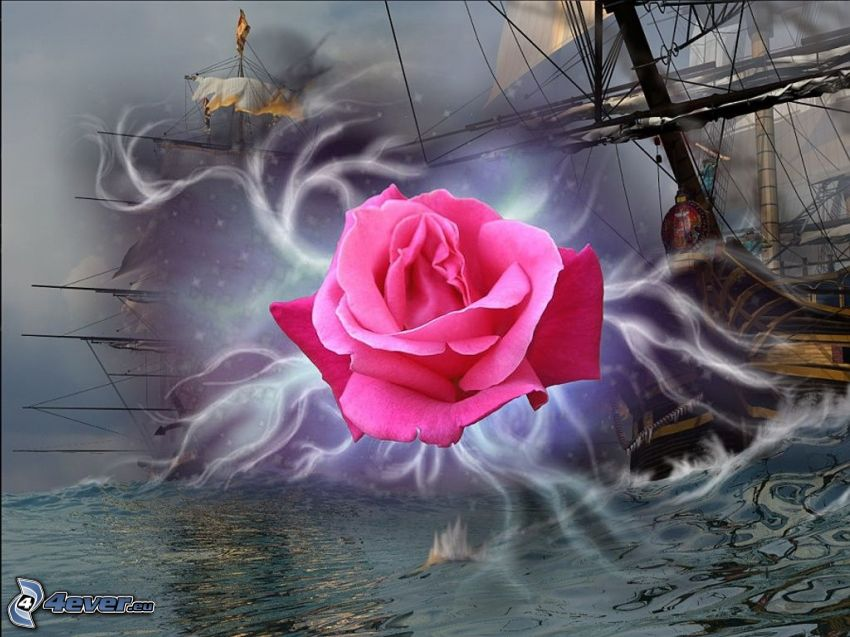 rosa viola, vele, Mare in tempesta
