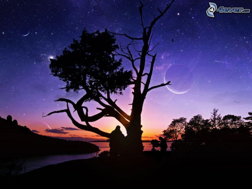siluetta d'albero, cielo notturno, luna, stelle, siluette