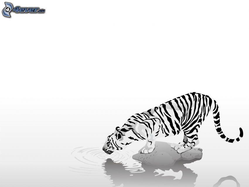 tigre bianca, acqua