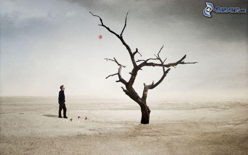 uomo, albero secco, deserto, mela