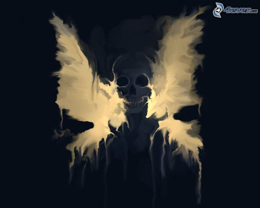 scheletro, cranio