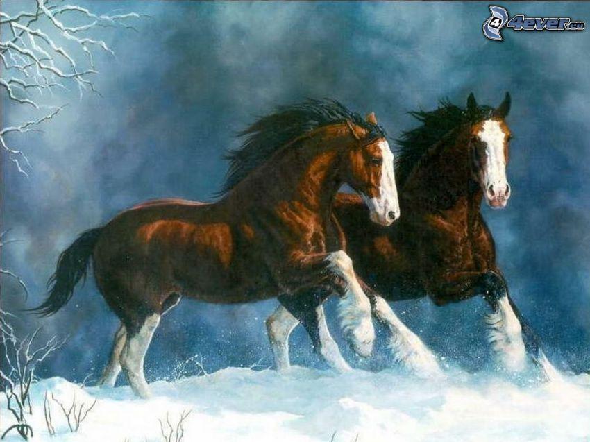cavalli, canter, neve