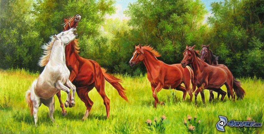 cavalli, prato