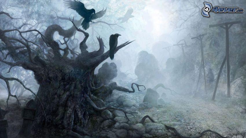 corvi, albero vecchio