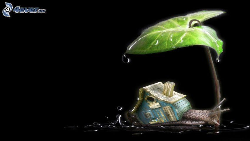 lumaca, casa, foglia verde, gocce d'acqua