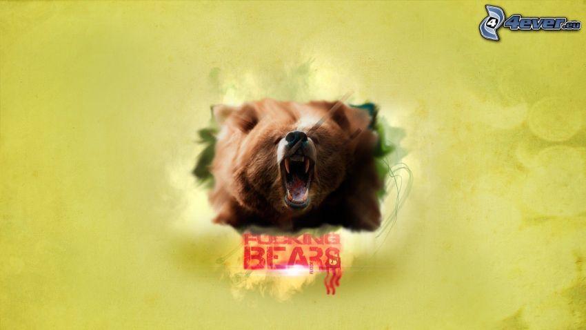 orso bruno, urlo