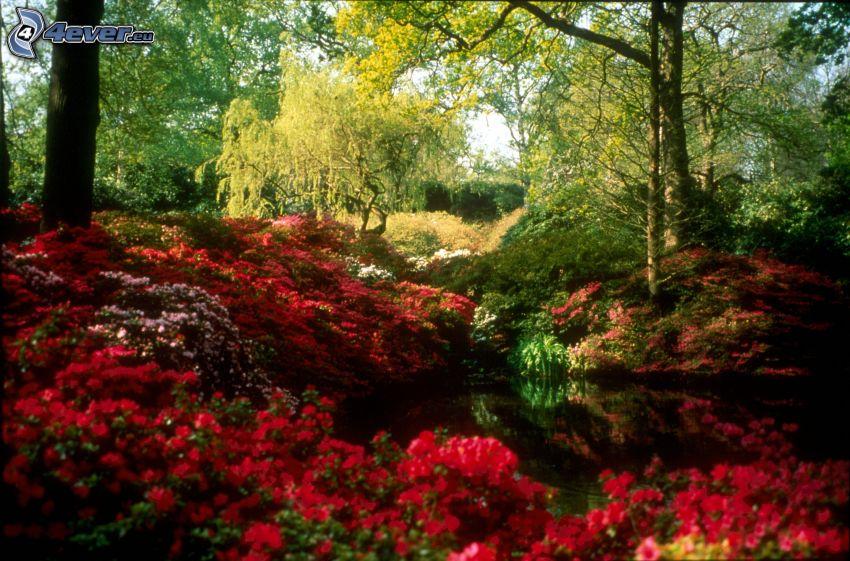 paesaggio primaverile, fiori rossi