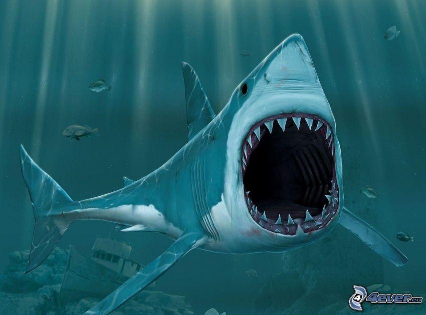 pescecane, bocca, naufragio