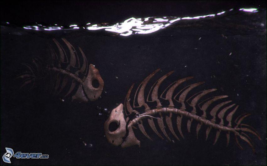 pesci, scheletri