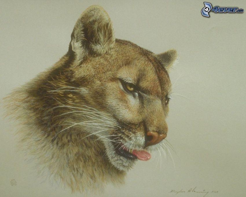 puma, la lingua fuori