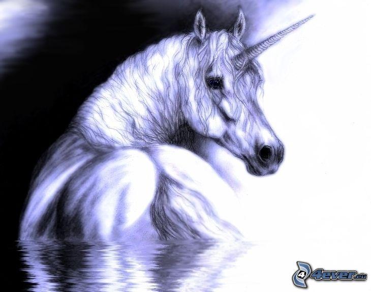 unicorno, cavallo
