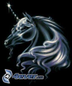 unicorno, criniera