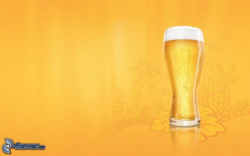 bicchiere di birra, sfondo giallo