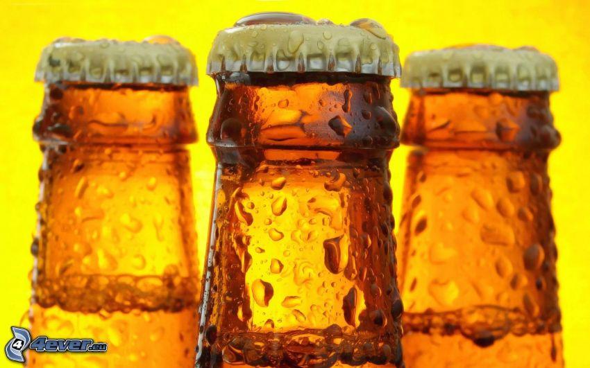 bottiglie, birra, gocce d'acqua
