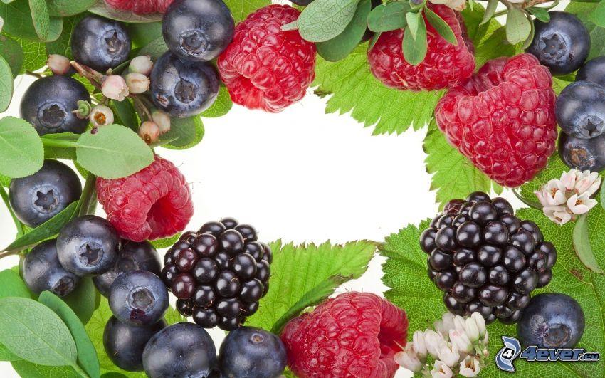 frutta di bosco, more, mirtilli, Lamponi