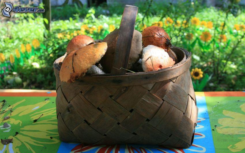funghi in un cesto