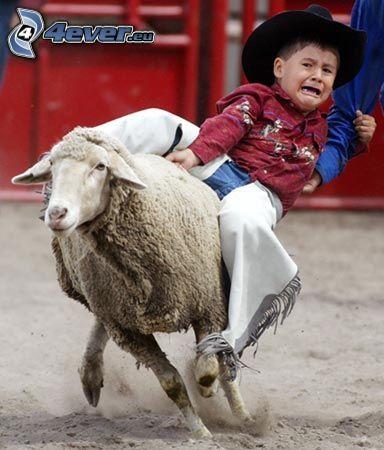 bambino, pecora, cowboy