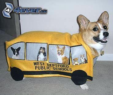 cane, autobus