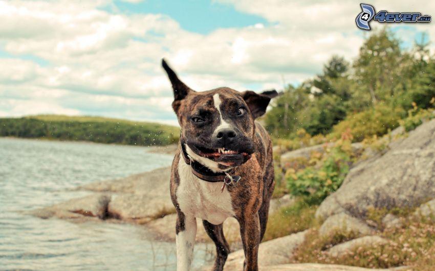cane, istantanea