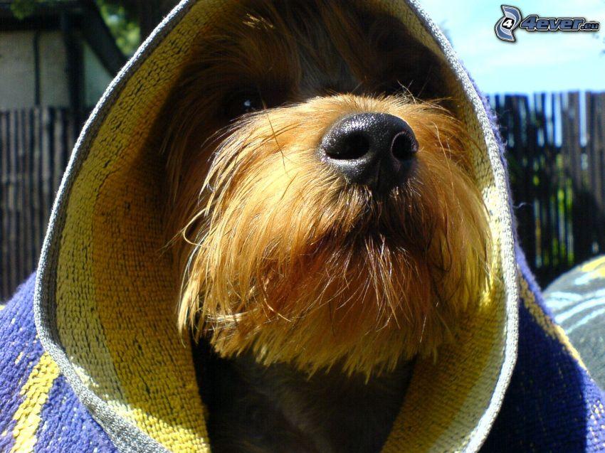 cane con un cappello