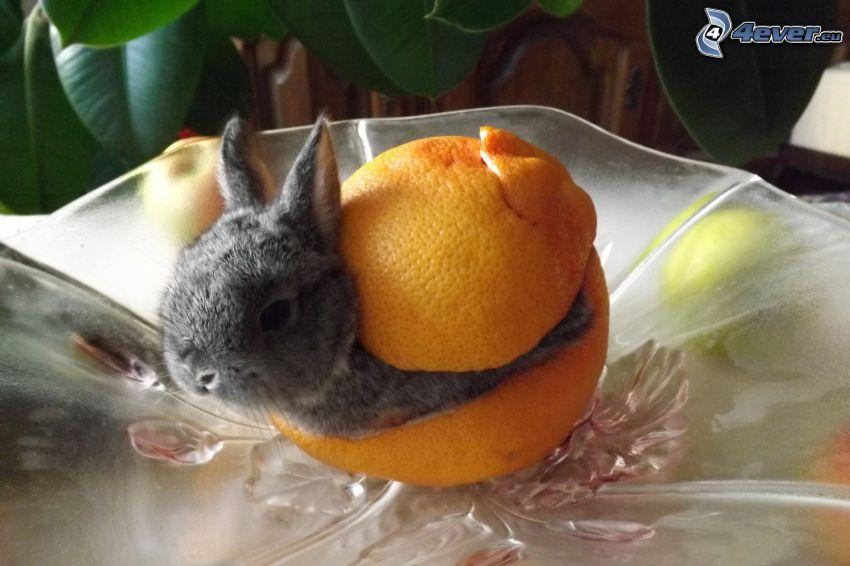 coniglio, buccia, arancia
