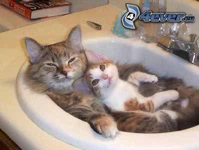 gatta e gattino, lavandino