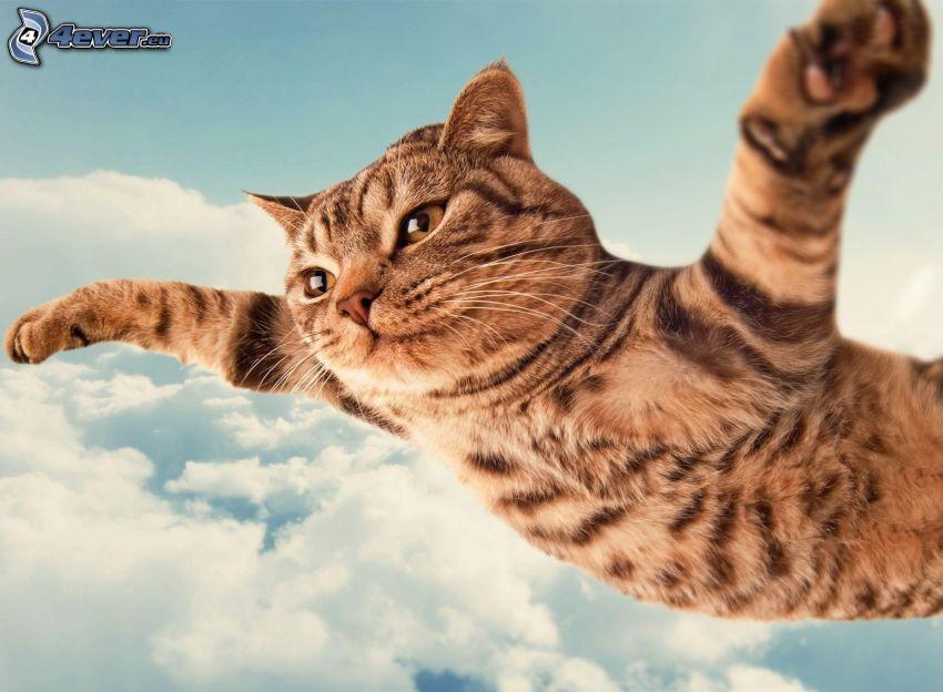 gatto, volo, nuvole, cielo