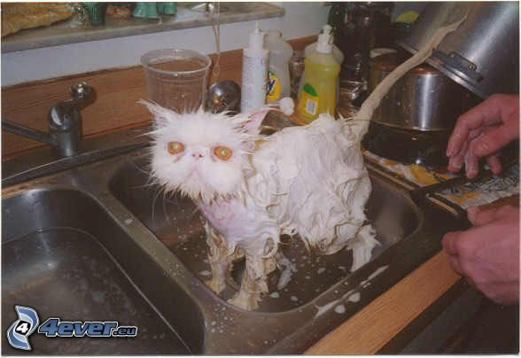 gatto bagnato, schiuma, sapone, lavandino, mostro