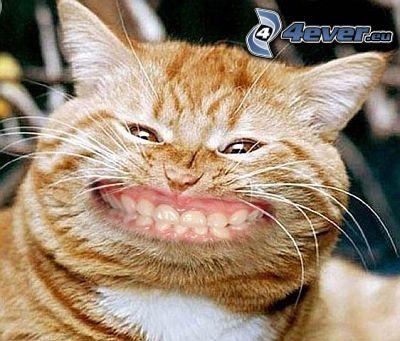gatto rosso, sorriso, divertente