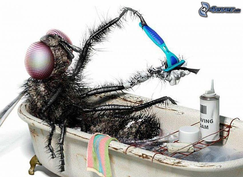 mosca, bagno, rasoio