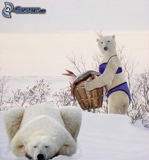 orsi polari, costume da bagno viola, inverno